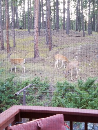Elk Ridge Bed & Breakfast: deer congregate around the back and are generally not too afraid of people