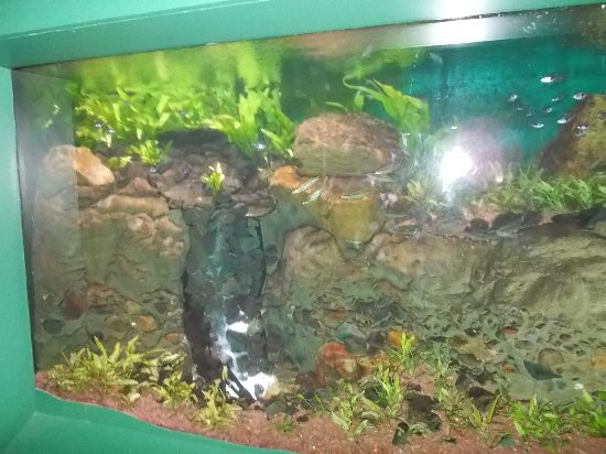 how do you make a waterfall in an aquarium picture of sea life