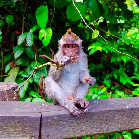 Private Bali Tours - Day Tours: taken when exploring the mongkey forest