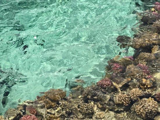 Steigenberger Coraya Beach Photo