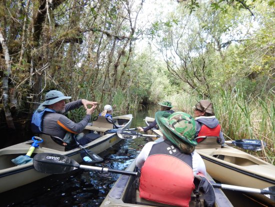 Everglades Area Tours: Don erklärt die Natur
