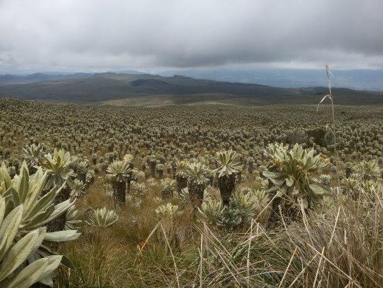 Zdjęcie Carchi Province