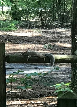Suwannee River State Park: Squirrel resting by trailer