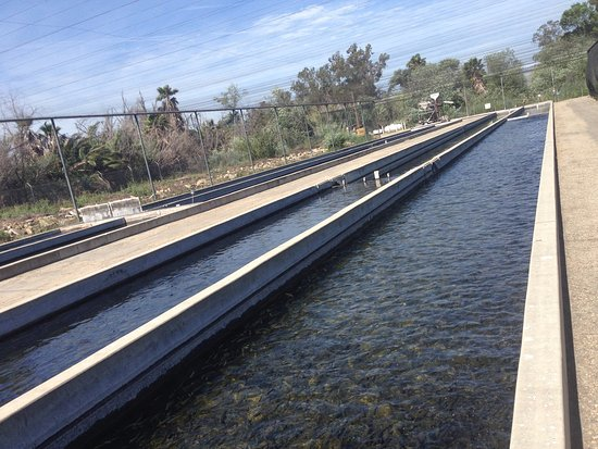 Fillmore Fish Hatchery