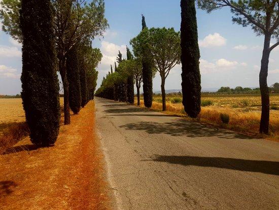 Principina Terra, Italia: Il viale di ingresso