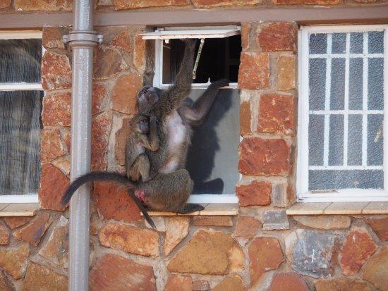 Forever Resort Blyde Canyon: photo2.jpg