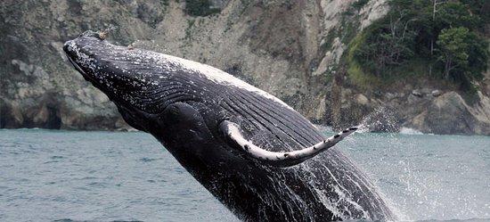 Las Islas Lodge: Tour de avistamiento de Ballenas