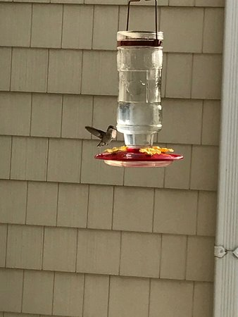Inn at Wawanissee Point: Breakfast on the deck with the hummingbirds