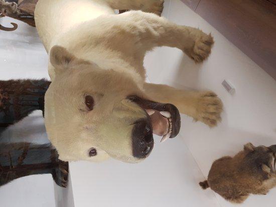 Musee d'histoire naturelle de Nantes : 20170819_125517_large.jpg