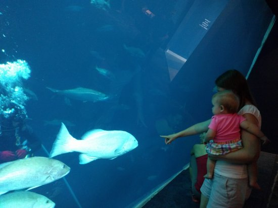 South Carolina Aquarium : IMG_20170823_101548_large.jpg