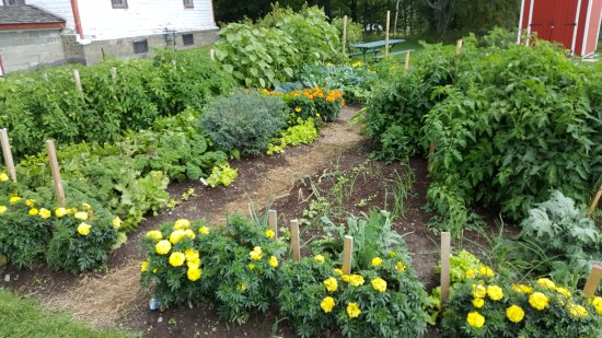 Sudbury, Canadá: Garden next to Farm House