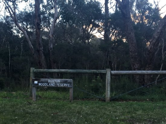 Shoreham, Australia: Buxton Woodland Reserve