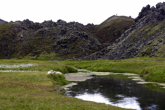 Hella, Islande : Relaxed sheep in Landmannalaugar