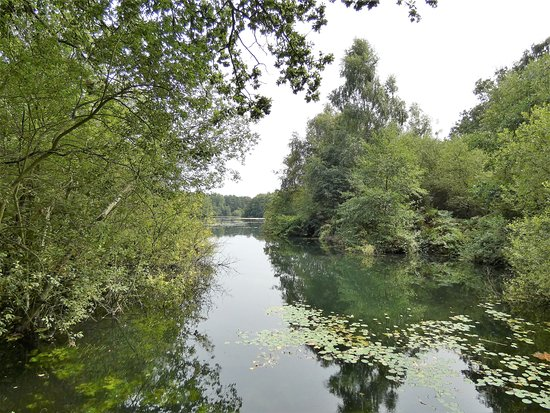 Taverham, UK: Lake reflected