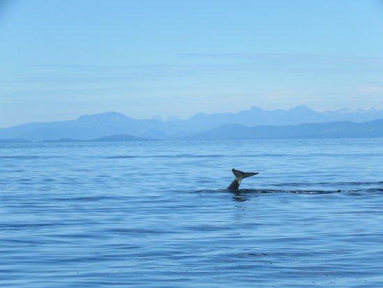 Ocean EcoVentures Whale Watching: 20170821184104_large.jpg
