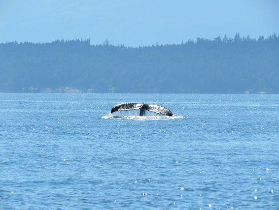 Ocean EcoVentures Whale Watching照片