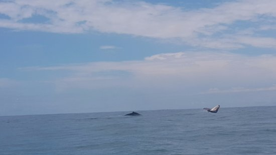 Dolphin Tours: So Cool!