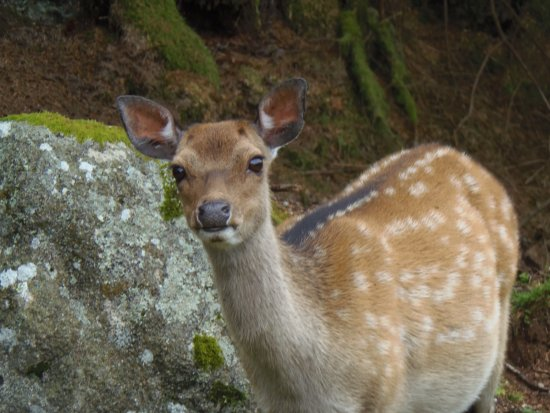 Dalbeattie, UK: beautiful Bambi