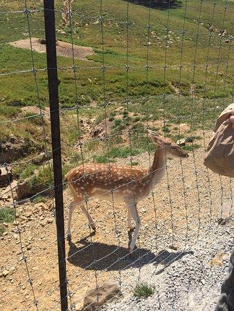 Lazy L Safari Park: photo0.jpg