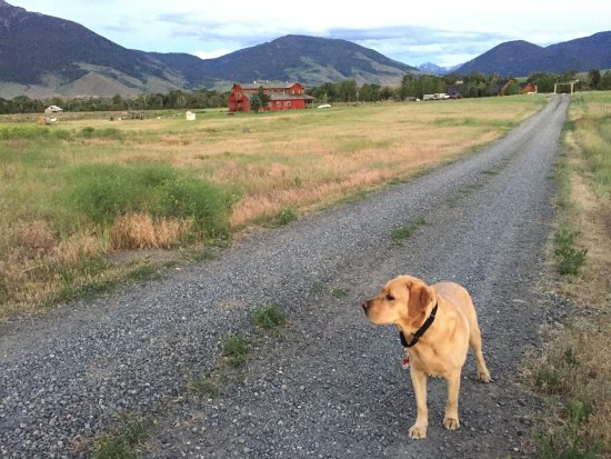 Emigrant, MT: Walking the dog (he's watching the grazing sheep, not pictured...)