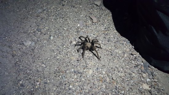 Mesquite Springs Campground: Local wildlife... right in the middle of your campsite.