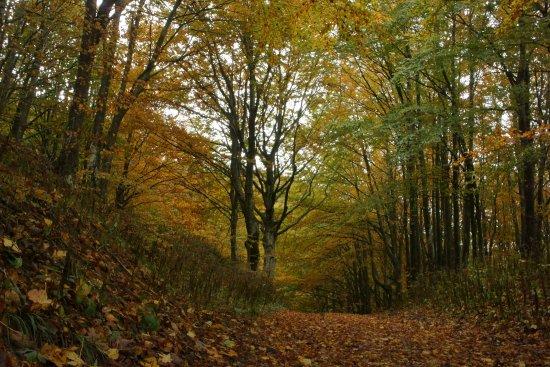 Parco Nazionale delle Foreste Casentinesi, Monte Falterona e Campigna: photo0.jpg