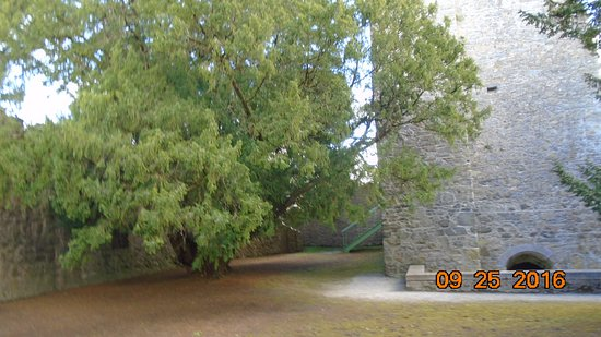 County Limerick, Ireland: Yes trees near the chapel