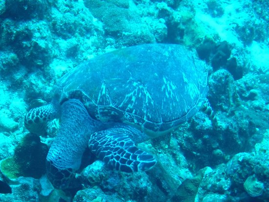 Art Pickering's Provo Turtle Divers: photo0.jpg