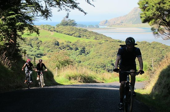 Otago Peninsula Bike Tour from Dunedin