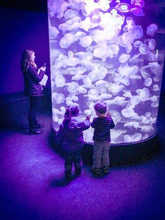 The Maritime Aquarium Norwalk Ct Top Tips Before You