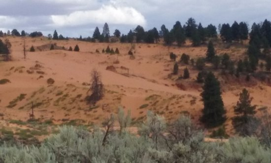 Coral Pink Sand Dunes State Park: view 1