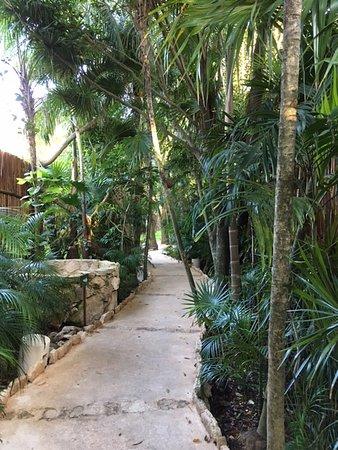 Viceroy Riviera Maya: Pathways through the mangrove