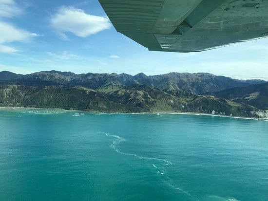 Air Kaikoura Aero Club: Amazing experience today, loved seeing two Sperm whales and 300 dusty dolphins, definite must do