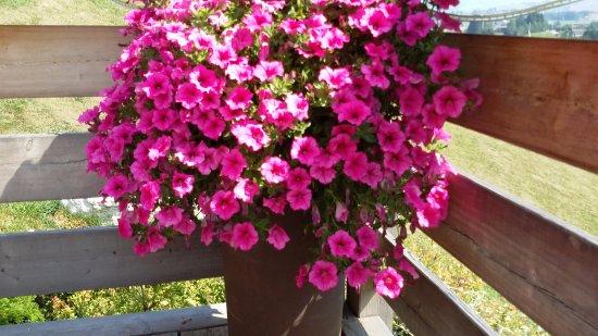 Fiori in terrazza - Foto di La Terrazza, Asiago - TripAdvisor
