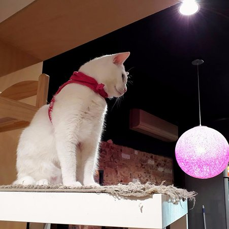 The Cat Cafe Purrth