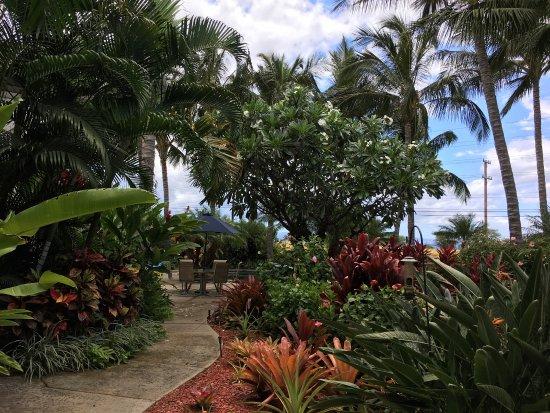 Pineapple Inn : photo4.jpg