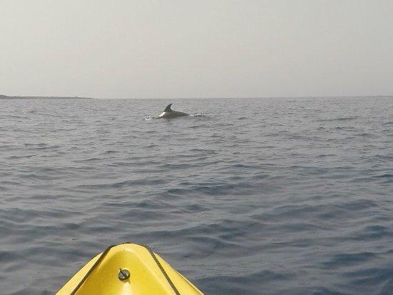 Tenerife snorkelling and kayaking Photo