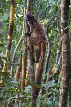 Maroantsetra, Madagascar: 20170827_111614_large.jpg