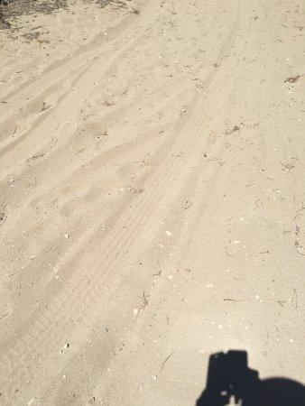 Schinias Beach : Παραλία Σχινιά