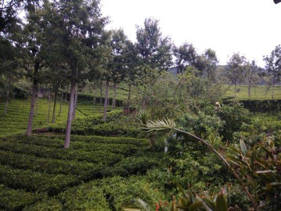 Excellent Place amidst a Tea Garden