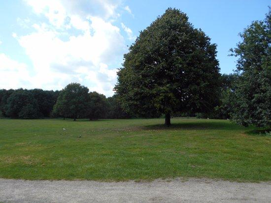 Schelfhorstpark