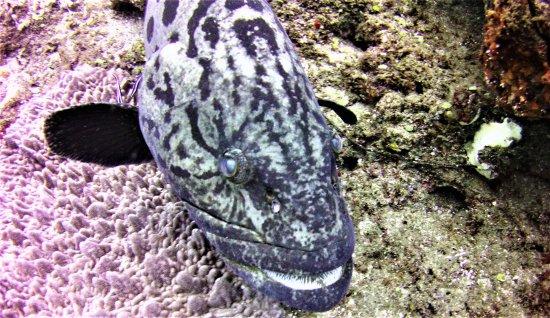 Maputaland Coastal Forest Reserve, South Africa: Les poissons voient peu de plongeurs, ils ne sont pas farouches