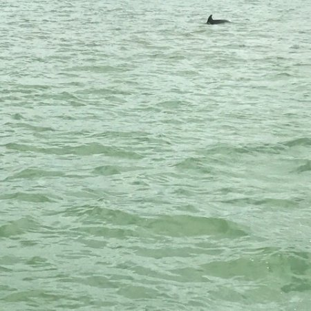 Encounters With Dolphins: photo0.jpg
