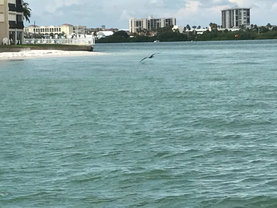 Encounters With Dolphins: photo1.jpg