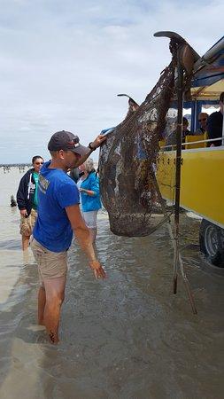 Cherrueix, Francia: Julien réalise une démonstration de pêche à la crevettes