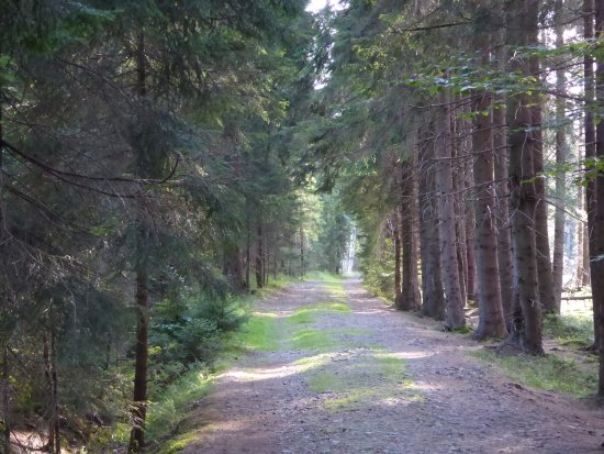 Western Poland, Poland: droga do torfowiska