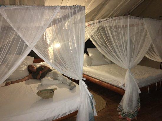 Roika Tarangire Tented Lodge : photo1.jpg
