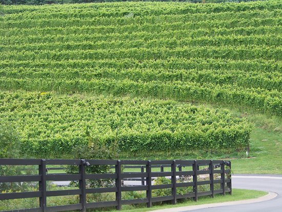 Hearth & Vine Cafe at Black Star Farms: This is their terraced vineyard.