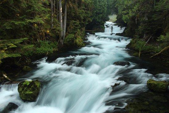 Sisters, OR: McKenzie River between the falls