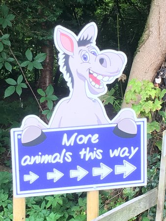 Newtown St Boswells, UK : The Scottish Borders Donkey Sanctuary